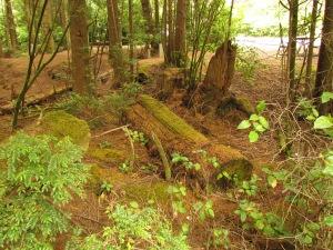 mossy undergrowth