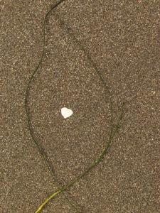 heart shell in a grass frame