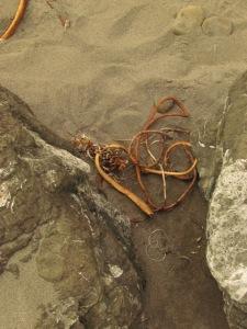 whaleshead beach sept 15, 2013 029
