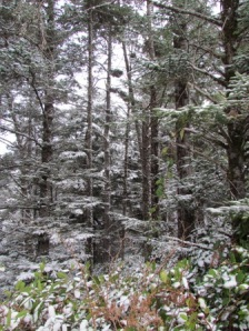 frosting on the trees