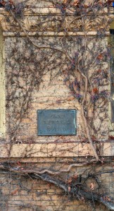 Viney Wall