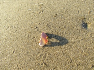 another shell and shadow